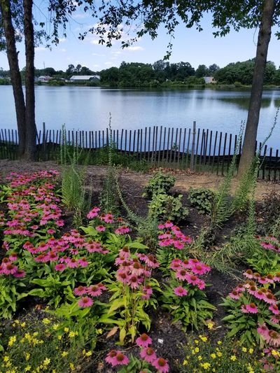 Flower Lake Water Nature Outdoors Beauty In Nature No People Springtime Growth Day Freshness Scenics Fragility Tree Sky Flower Head New Jersey