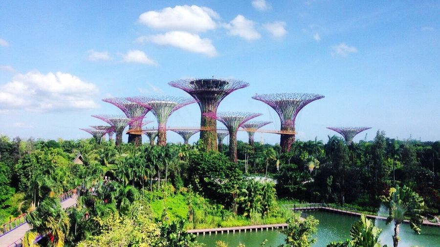 Supertrees from Singapore Garden Photography Gardensbythebay Gorgeous Placetovisit Avatar Highlyrecommended Placeforphotos Photography Trees Skyscape Urban Urban Landscape Urbanphotography Spectacular Beautiful Nature Beautifuldestinations Nature Photooftheday Photographylovers