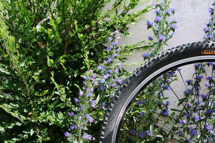 Purple flowering plants by bicycle