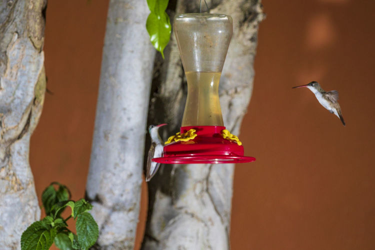Animal Wildlife Animals In The Wild Vertebrate Bird Animal Themes Animal Hummingbird Bird Feeder No People Close-up Red Focus On Foreground Flying One Animal Day Nature Outdoors Transparent Food Mid-air