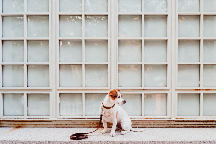 Dog looking away while sitting against wall