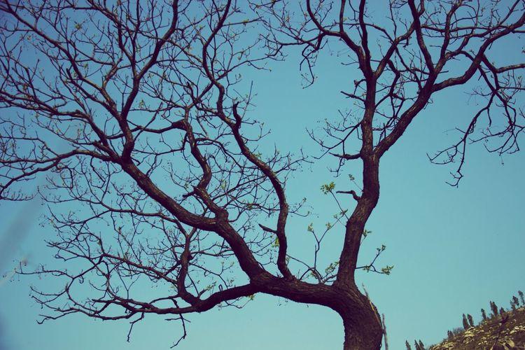 树 暮色 奇怪