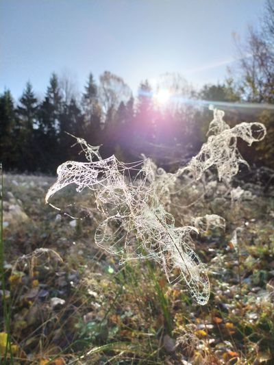 Close-up of spider web on plant against bright sun