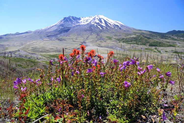 View of flowers growing in mountains