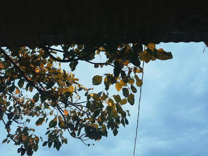 Flowers, Nature And Beauty Hello World Enjoying Life Photography Love 🙊💕 Yellow 😚
