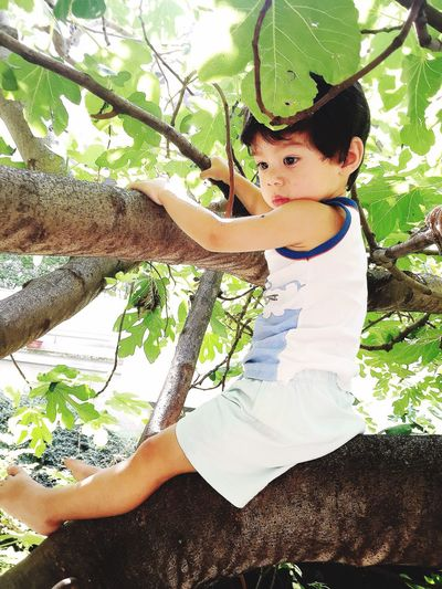 My Best Photo 2015 Climbing Trees Son Love Summer Figgtree Budapest Hungary