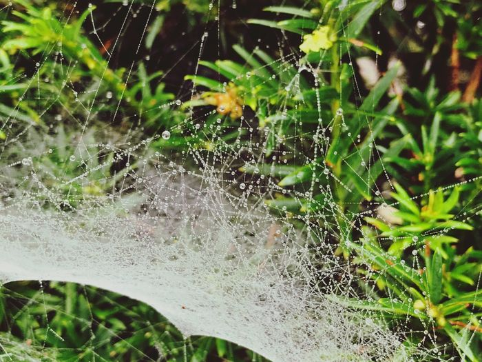 Spider Web Nature Web Focus On Foreground Spider Outdoors Fragility Close-up No People Day Drop Plant One Animal Beauty In Nature Growth Water Freshness Trapped Animal Themes Nature Beauty In Nature The Week On EyeEm Early Morning Amsterdam Perspectives On Nature