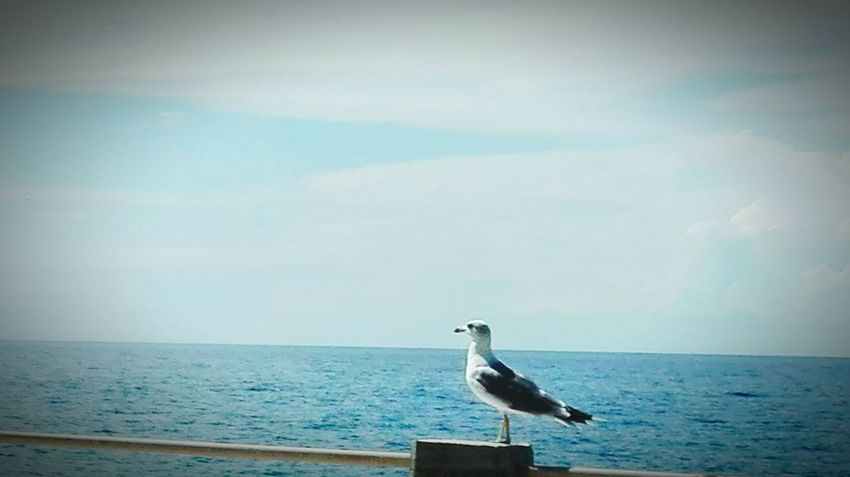 Animal Themes Water Animals In The Wild Wildlife Bird Sea One Animal Seagull Perching Zoology Horizon Over Water Vertebrate Tranquility Nature Full Length Railing Tranquil Scene Beauty In Nature Scenics Water Bird