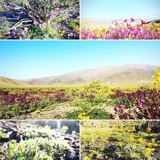 Jardín de desierto 🌵😊