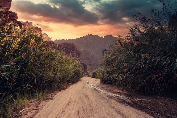 Road amidst plants against sky during sunset