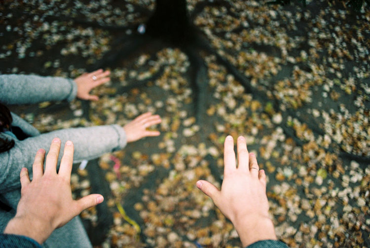 High angle view of hands against autumn leaves on land