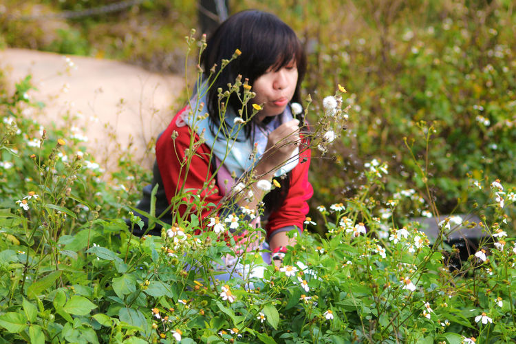 Young woman blowing dandelion amidst plants on field