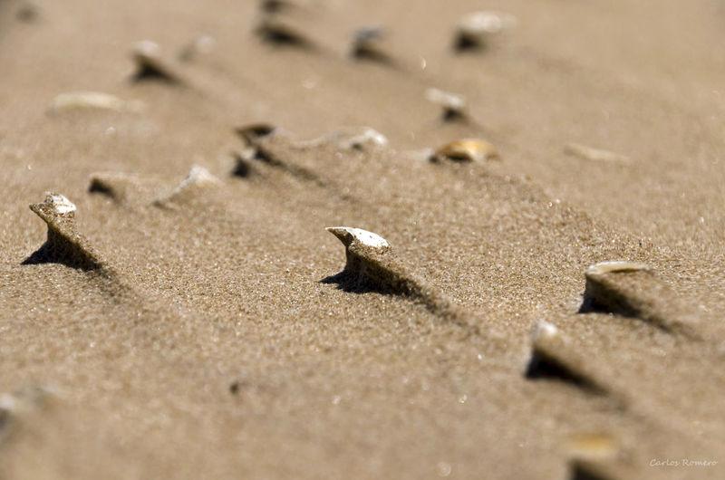 Arena Conchas Erosion playa Levante Viento
