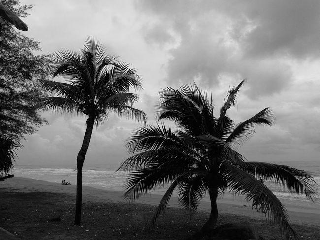 Black & White Taking Photos Enjoying Life Holiday Black And White Photography Black And White Coconut Trees Thailand Thai Huaweiphotography