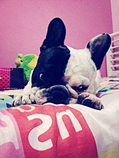 Animals!!!!❤️❤️ First Eyeem Photo