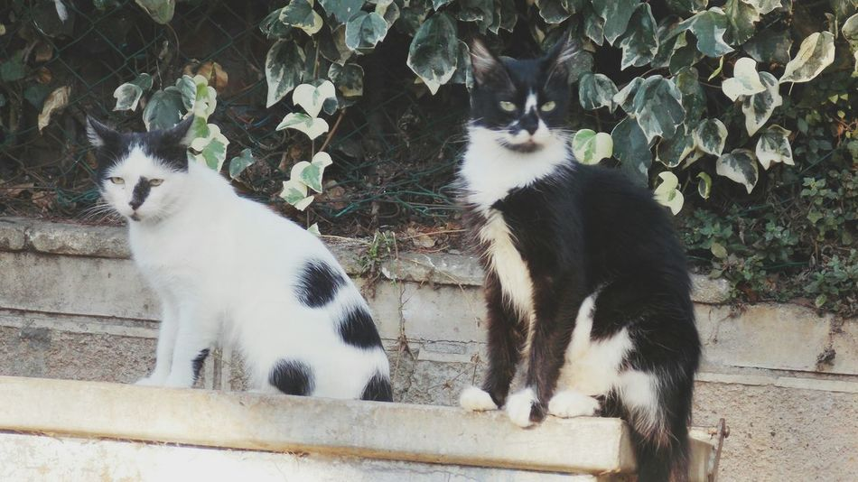 Cat Angry Cats Catstagram Catlovers Angrycat Blackcats Whitecats Like Animals
