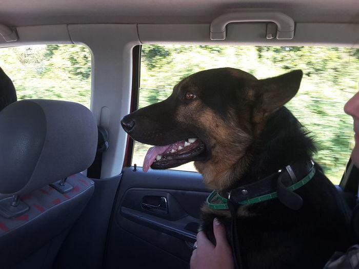 Dog Trey Travel