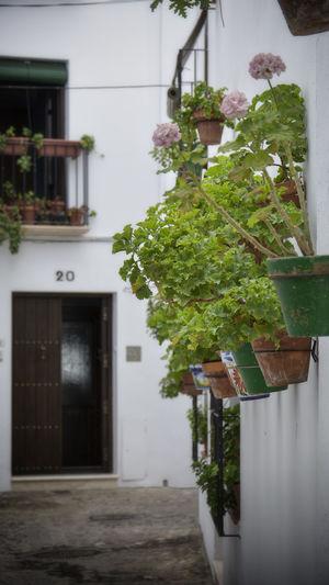 Architecture Barrio De La Villa Building Exterior History Plant Potted Plant Turism