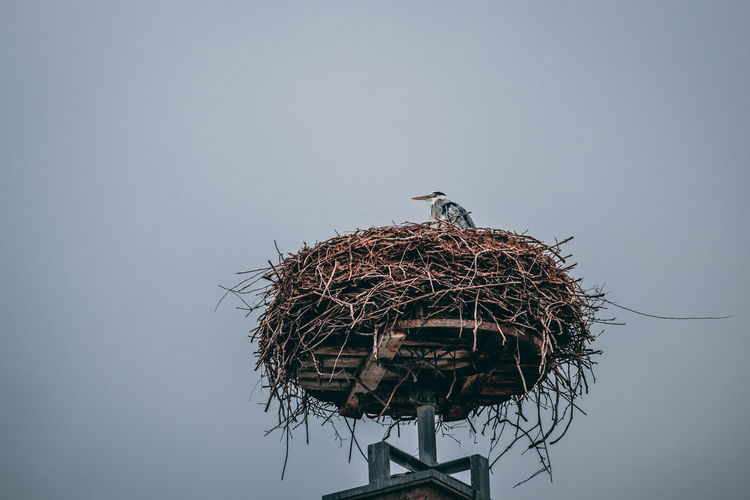 Low angle view of birds perching on nest