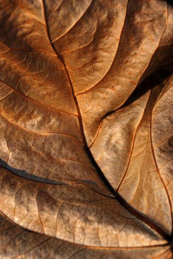 Full frame shot of dried leaf