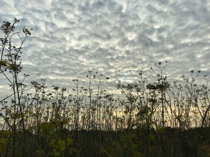 Gris Sky Cloud - Sky Plant Beauty In Nature Nature Growth No People Day Tranquil Scene