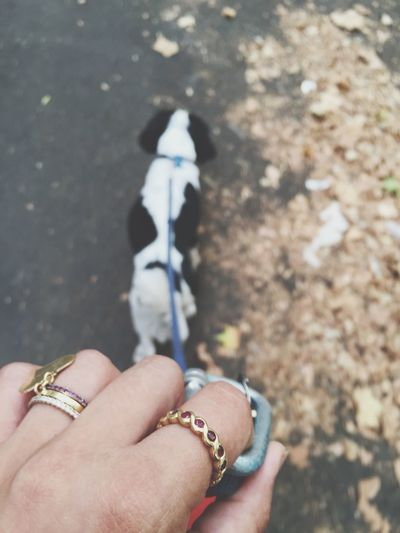 Cropped Woman Hand With Rings Walking Dog On Street