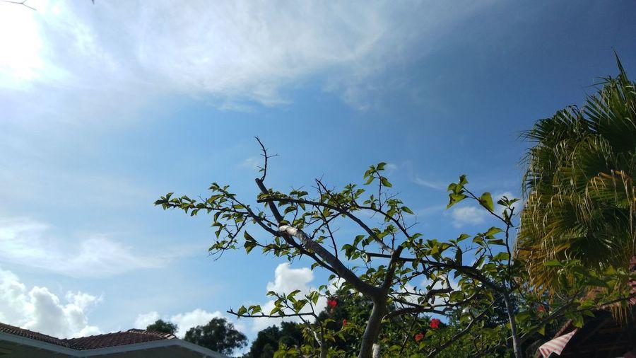 Tree Blue Tree