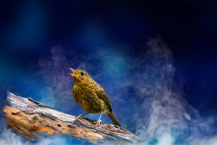 Close-up of bird perching on wood against sky