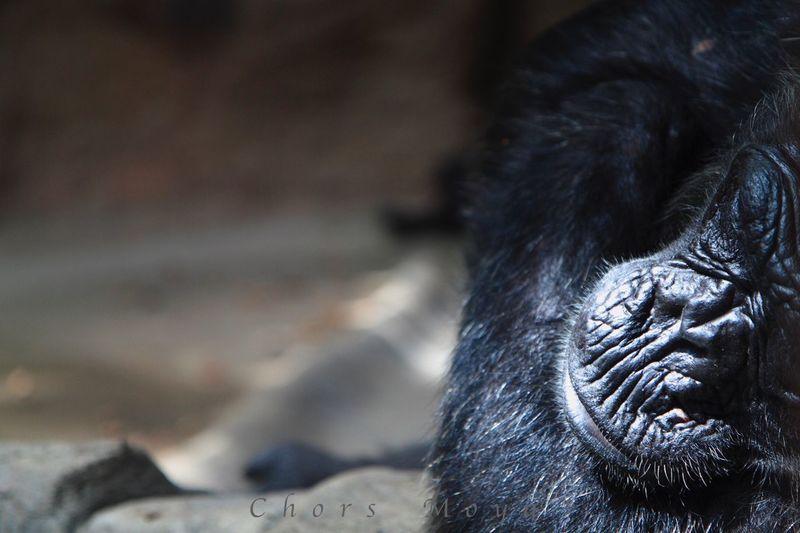 Sin palabras . . . Sense paraules . . . Without words . . . Animal Themes Zoology In Captivity Catalunyalove No Tengo Palabras Barcelonalove
