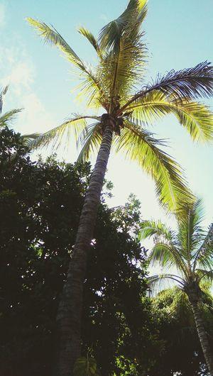 Palmtree Taking Photos Check This Out Enjoying Life Hello World Beautiful Nature Holiday♡ Spain♥ Memories ❤ Love