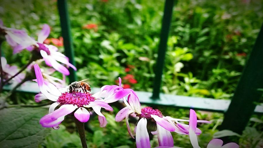 Showcase March:: Check Out The Young HoneyBee On Flower That's Me AmazingMughal Garden....... Tags....Beautiful Wonderful Admirable Fantastico Dont Understand Me Pleaselike Pleasefollow Pleasant Pleasure My Passion There Will Be Haters I Am The Ghost. I Am The Devil ...