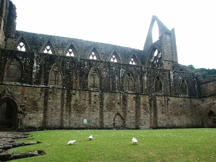 Tintern Abbey 🙌 Tintern Abbey Monastery Ruin Travel Destinations History Grass Outdoors Green Color Day Architecture Built Structure Building Exterior No People Nature Sky
