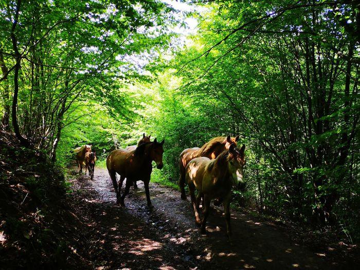 Horses Path