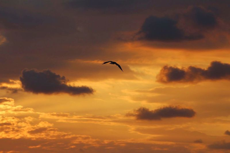 Sunset Italy Sicily Vertebrate Bird Sky Sunset Animal Themes Animal Cloud - Sky Flying Animals In The Wild Animal Wildlife One Animal Beauty In Nature Orange Color No People Mid-air Tranquility Tranquil Scene