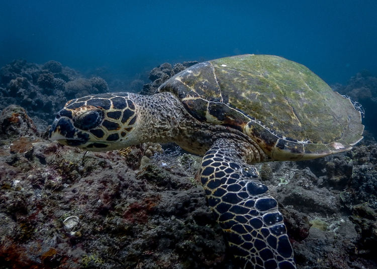 View of turtle in sea
