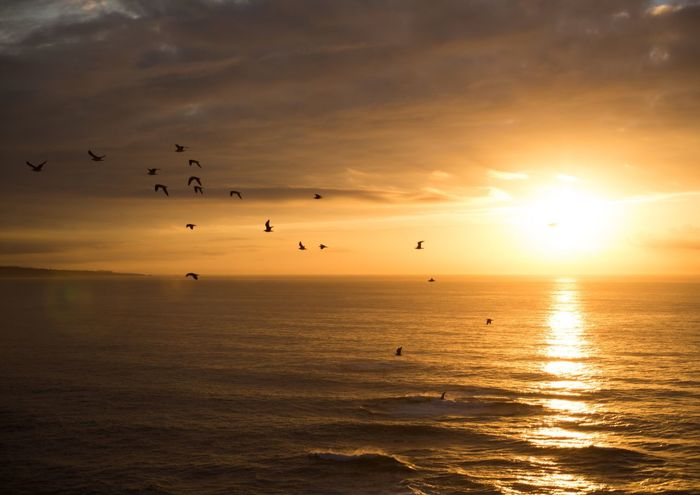 Sunset Sky Flying Bird Sea Water Nature Scenics Waterfront Sun Beauty In Nature Silhouette Animal Themes Sunlight Tranquility Horizon Over Water Outdoors Flock Of Birds Large Group Of Animals Migrating EyeEmNewHere