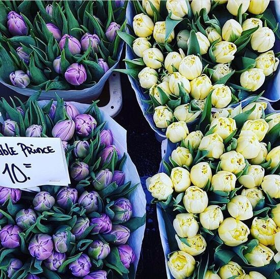 DAM Feeling For Sale Freshness No People Tulips Amsterdam Flower Market Market First Eyeem Photo