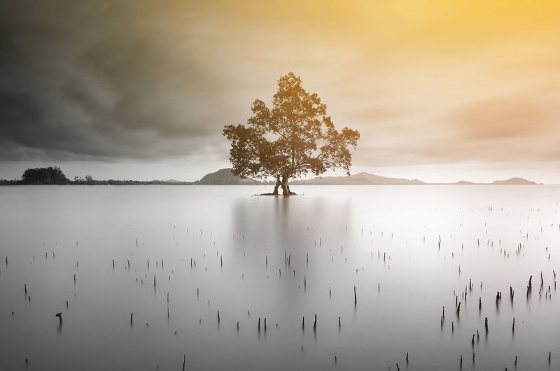 Fine art shot of lonely tree in black and white Alone Bali Nature Single Flower Beauty In Nature Blackandwhite Cold Temperature Day Fine Art Landscape Long Exposure Mountain Nature No People Outdoors Scenics Seascape Sky Tranquil Scene Tranquility Tree Water