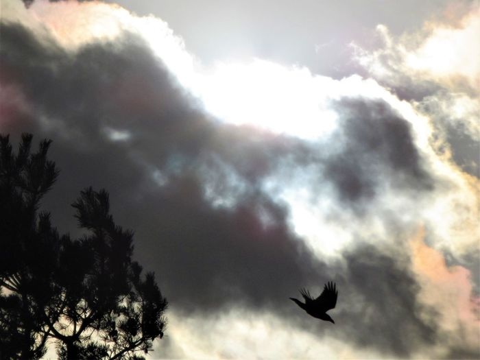 Crow Cloud -