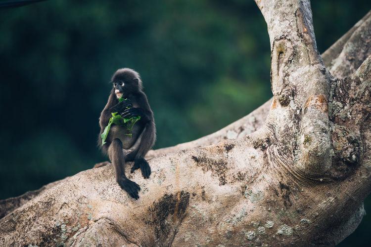 Monkey In Relaxing On Tree