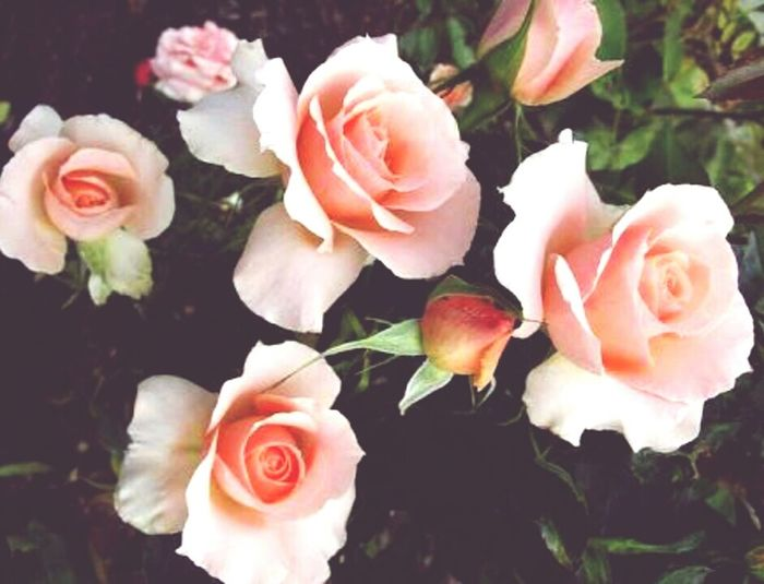 🌹 Flower First Eyeem Photo