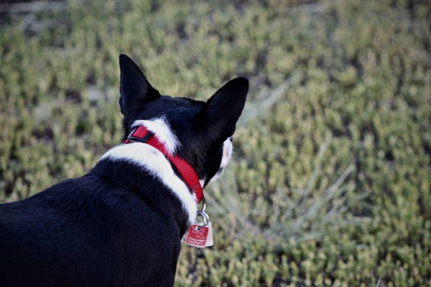 Animal Themes Close-up Day Dog Domestic Animals Focus On Foreground Mammal Nature No People One Animal Outdoors Pet Collar Pets