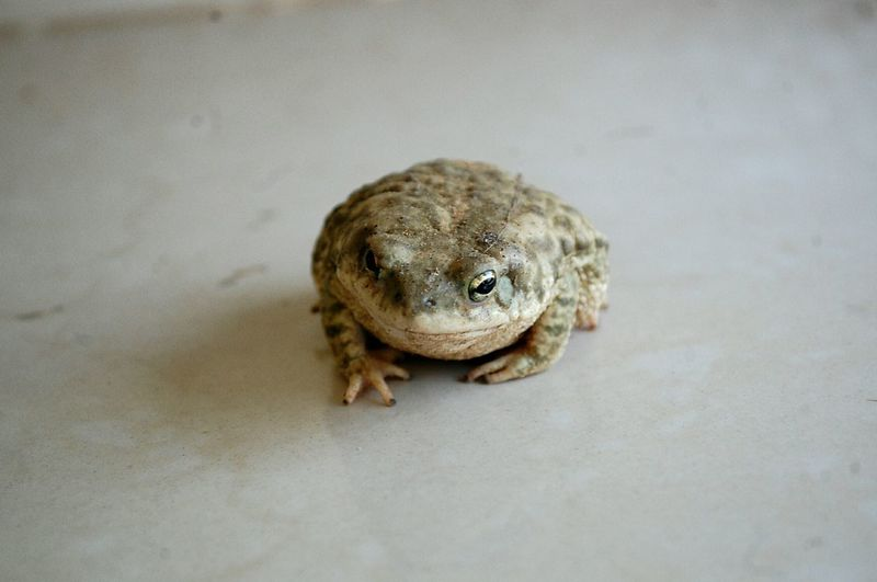 Close-up of toad on floor