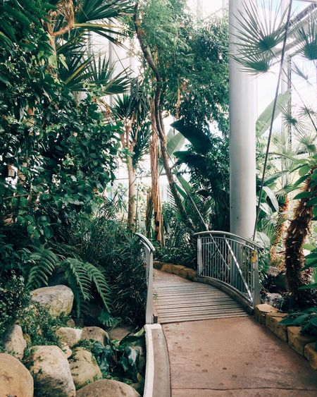 Wildlife & Nature Indoors  Winter Garden Plant Plants Trees Path My Favourite Place
