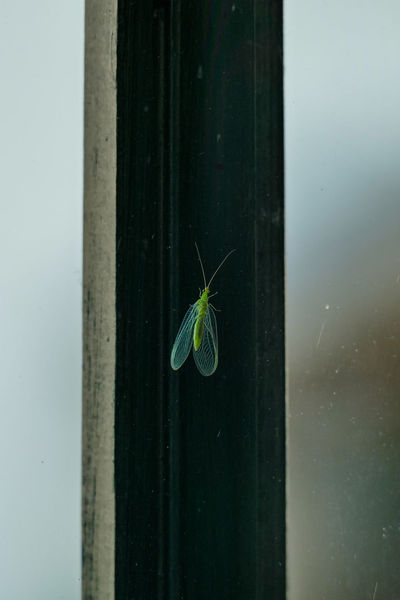 Fenster Florfliege Sommerhitze Animal Themes Animal Wildlife Animals In The Wild Beauty In Nature Close-up Damselfly Day Fragility Full Length Green Color Insect Insektenfotos Leaf Nature No People One Animal Outdoors Schatten Spider Water Wildlife