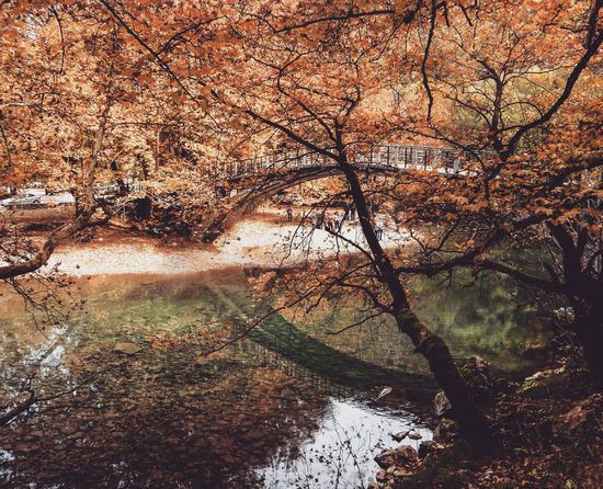 Zagoroxoria,greece Fall Beauty Fall Leaves Fall_collection Lakeside Bridge Water Reflections Reflections Trees Collection Beautiful Nature Eyeemphotography Canonphotography Canon EyeEm Nature Lover Canon_official Eye4photography
