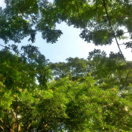 To a darker shade of green Eyeem Philippines Sony Xperia Photography. Trees Green