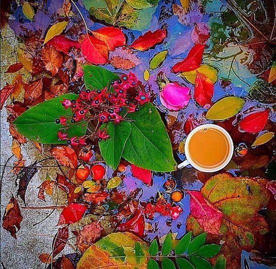 Sonbahar Sonbaharyaprakları Photooftheday Bikahve Kahvekeyfi Kahvemolasi Sonbaharkahvesi Autumn Autumn Colors Autumn Leaves