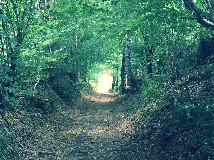EyeEm Best Shots EyeEm Nature Lover Nature_collection Forest Road Walking Three