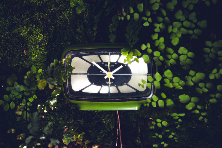 Close-up of clock against plants in garden